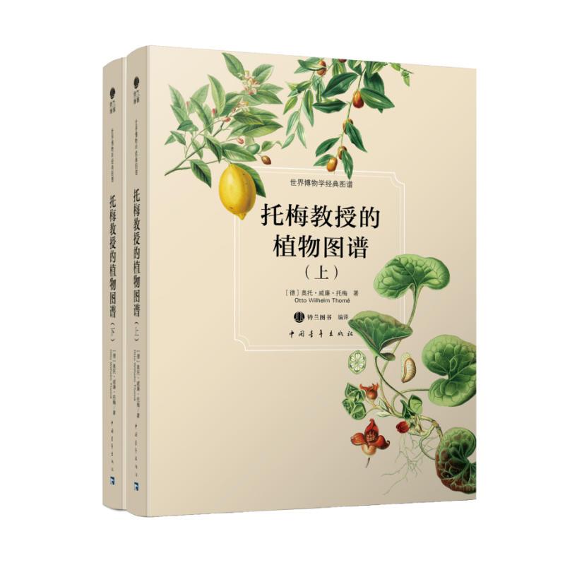 托梅教授的植物图谱(上下)(pdf+txt+epub+azw3+mobi电子书在线阅读下载)